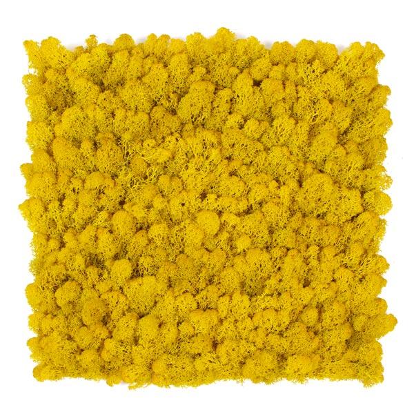 jardin-vertical-musgo-artificial-liquen-amarillo-img1