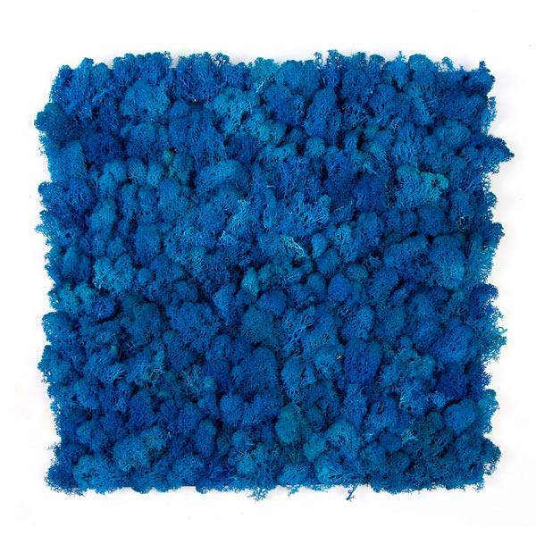 jardin-vertical-musgo-artificial-liquen-azul-img1