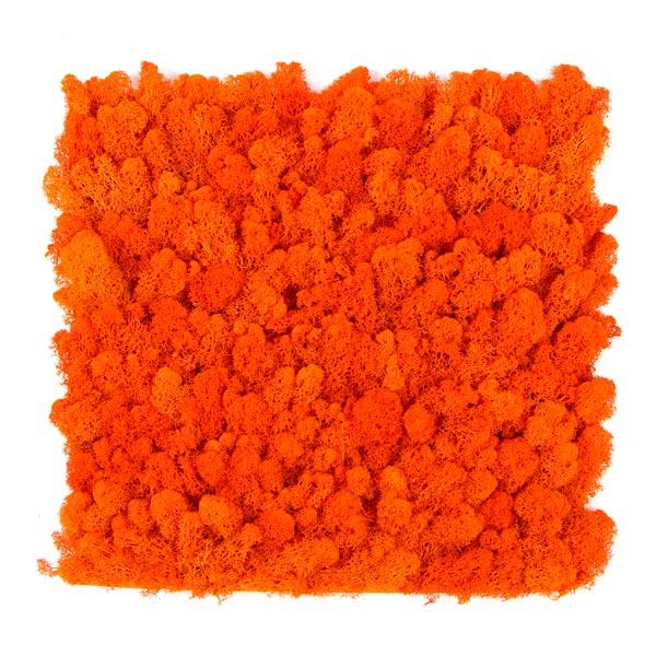 jardin-vertical-musgo-artificial-liquen-naranja-img1