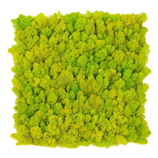 jardin-vertical-musgo-artificial-liquen-verde-graso-img1