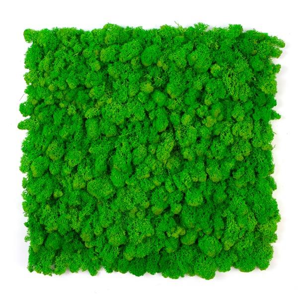 jardin-vertical-musgo-artificial-liquen-verde-img1