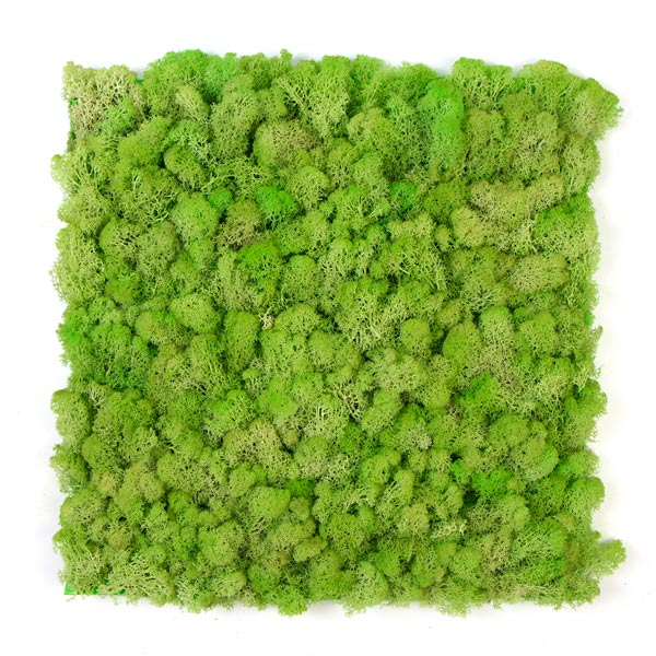 jardin-vertical-musgo-artificial-liquen-verde-natural-img1