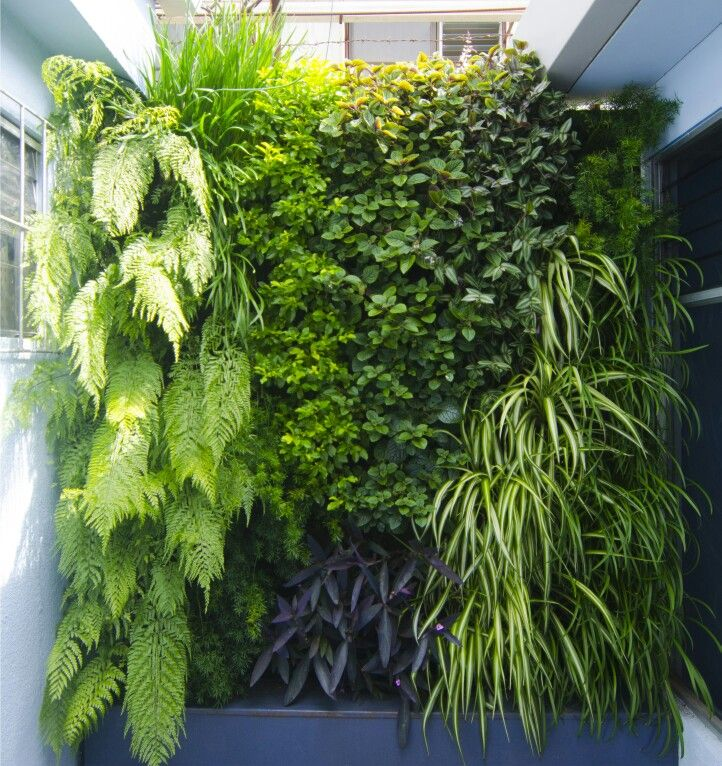 Ventajas y desventajas de un jardín vertical artificial