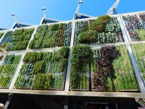 empresa jardines verticales artificiales
